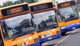 news_img1_80048_autobus-amat1