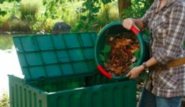 compostaggio-650x350
