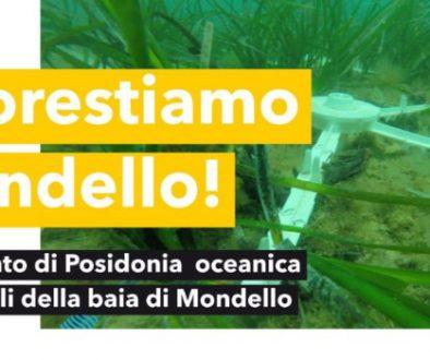 mondello1