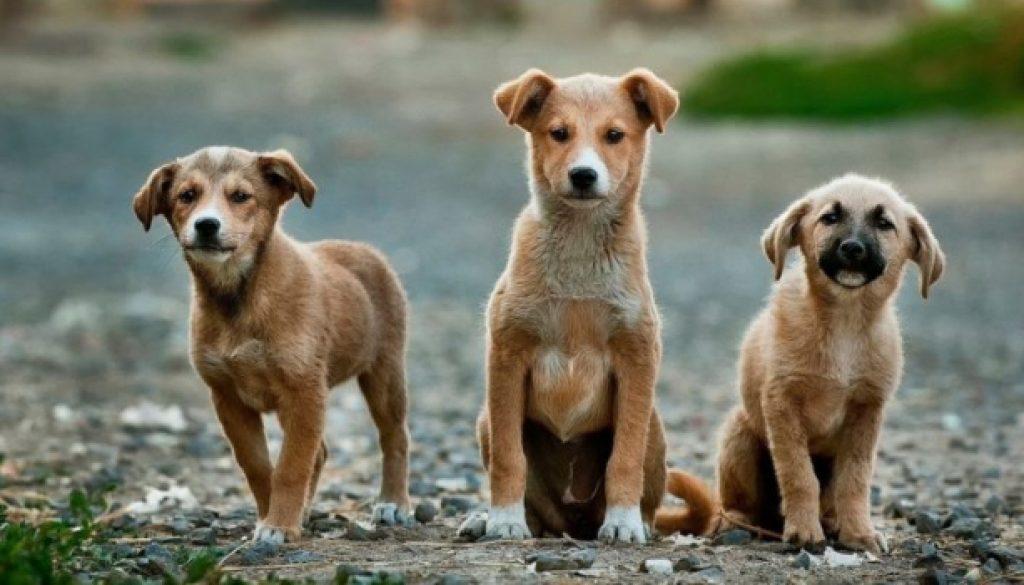 cani-cuccioli-800x445
